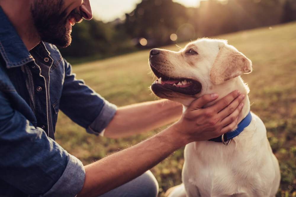 Can I Bring My Pet to Rehab? The Answer Might Surprise You